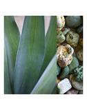 Desert Zen III Poster by Sidney Aver