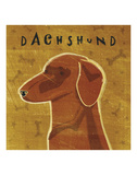 Dachshund (red) (square) Posters by John W. Golden