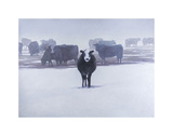 Cows in the Snow Print by Todd Telander