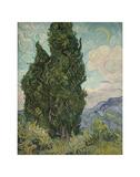 Cypresses, 1889 Posters par Vincent van Gogh