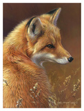 Curious - Red Fox Print by Joni Johnson-godsy