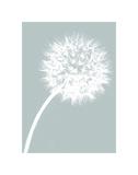 Dandelion Tilt (blue) Posters by Jenny Kraft