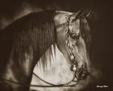Desert Arabian Posters par Barry Hart