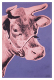 Cow, 1976 (pink & purple) Posters by Andy Warhol