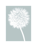 Dandelion (blue) Posters by Jenny Kraft