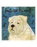 English Bulldog (square) Print by John W. Golden