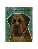 English Mastiff (Brindle) Posters by John W. Golden