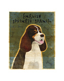English Springer Spaniel (tri-color) Prints by John W. Golden