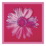 Daisy, c. 1982 (crimson and pink) Plakater af Andy Warhol