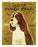 English Springer Spaniel Posters by John W. Golden