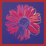 Andy Warhol - Daisy, c.1982 (blue & red) Plakát