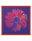 Daisy, c.1982 (blue & red) Kunstdrucke von Andy Warhol