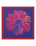 Daisy, c.1982 (blue & red) Art by Andy Warhol