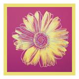 Daisy, c.1982 (fuchsia & yellow) Art by Andy Warhol