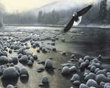 Eagle Over Water Art by Kevin Daniel