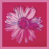 Daisy, c. 1982 (crimson and pink) Posters by Andy Warhol