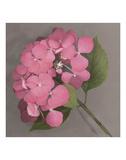 Pink Hydrangea Prints by Erin Clark