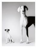 Domino and Daisy Prints by Amanda Jones