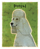 Poodle (grey) Prints by John W. Golden