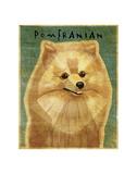 Pomeranian Prints by John W. Golden