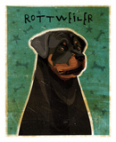Rottweiler Prints by John W. Golden