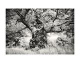 Portrait of a Tree, Study 1 Prints by Marcin Stawiarz