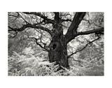 Portrait of a Tree, Study 12 Art by Marcin Stawiarz