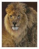 Power and Presence - African Lion Posters by Joni Johnson-godsy