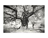 Portrait of a Tree, Study 2 Print by Marcin Stawiarz