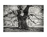 Portrait of a Tree, Study 3 Poster by Marcin Stawiarz