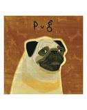 Pug (square) Art by John W. Golden
