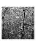 Pine Bramble Print by Erin Clark