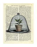 Plant Pot in Glass Cloche Posters by Marion Mcconaghie