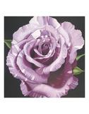 Rose Print by Elizabeth Hellman