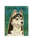 Siberian Husky Prints by John W. Golden