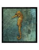 Seahorse Prints by John W. Golden