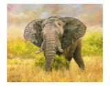 Savannah Elephant Prints by David Stribbling