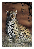 Sitting Leopard Giclee Print by Rajendra Singh