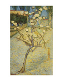 Small Pear Tree in Blossom, 1888 Poster by Vincent van Gogh