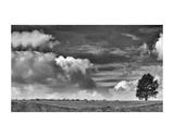 Sheep on the Horizon Art by Trent Foltz