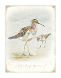 Sandpipers Posters by  Art Marketing