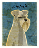 Schnauzer Posters by John W. Golden