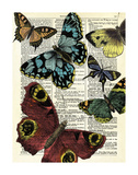 Selection of Butterflies Posters by Marion Mcconaghie