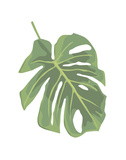 Philodendron 2 Prints by Jenny Kraft