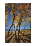 Skinny Fall Prints by Bob Larson