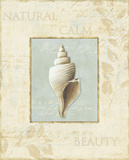 Soothing Words Shells I Prints by Lisa Audit