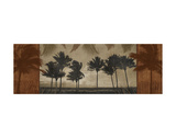 Sunlit Palms II Prints by Harold Silverman