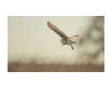 Soft Light Prints by Mark Bridger