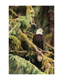 Silent Sentinel, Alaska Poster by Art Wolfe