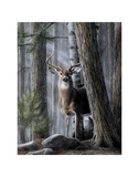 Solitary Buck Prints by Kevin Daniel